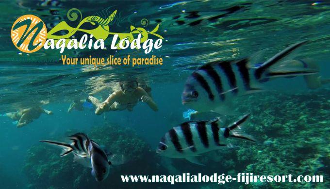 Snorkeling-Yasawa-islands-Wayalailai-Fiji-resort-Naqalia-Lodge