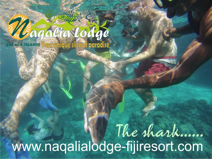https://www.naqalialodge-fijiresort.com -Naqalia Lodge-Yasawa islands-Fiji resort-sharks-Octopus resort